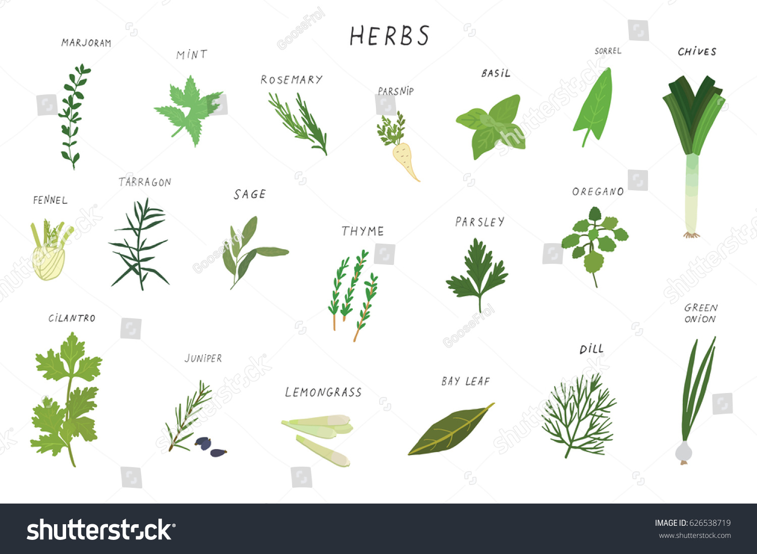 Herbs spices green vector illustrations set.  #626538719