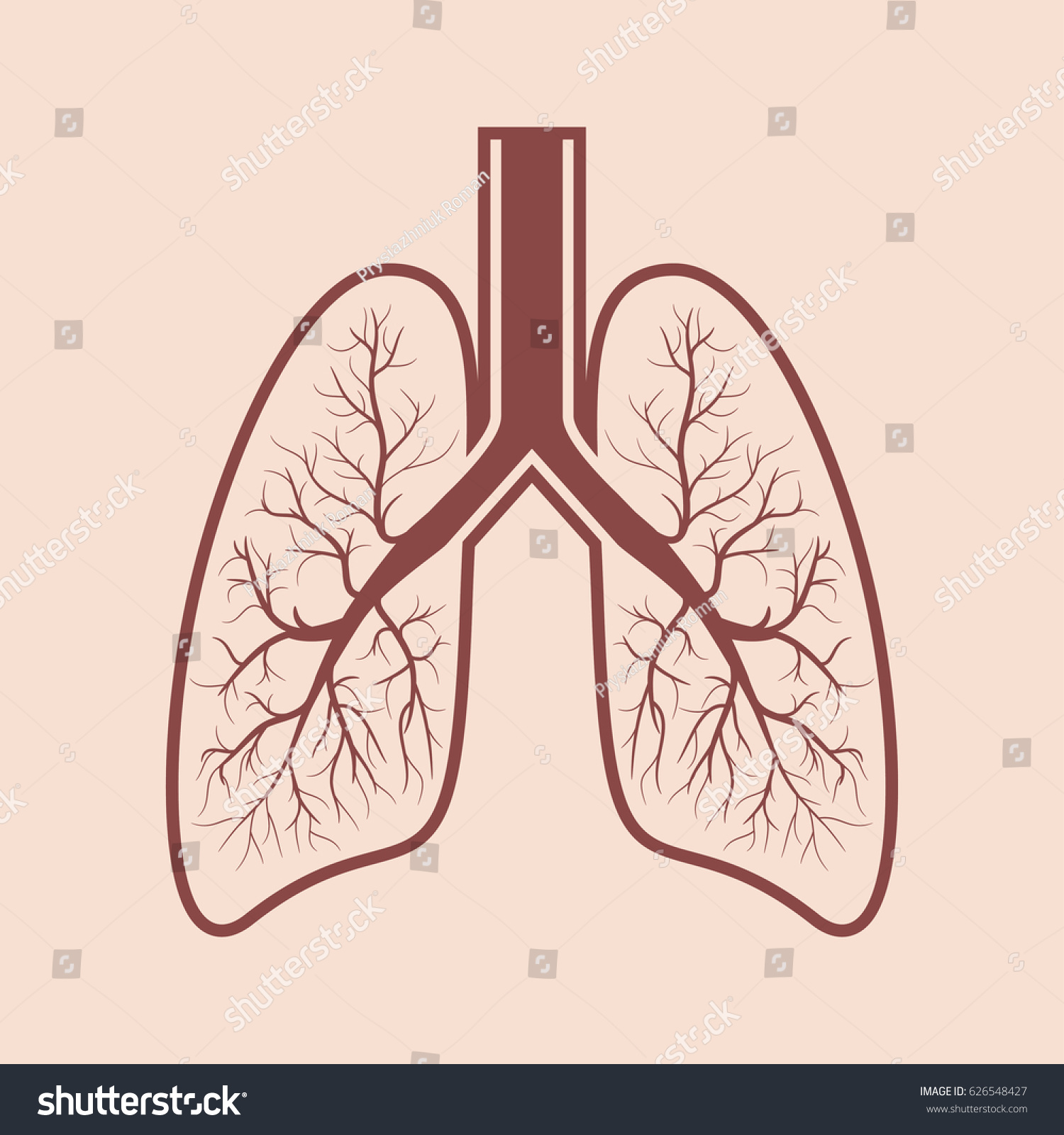 Human Lung Anatomy Respiratory System Graphics Stock Vector Royalty
