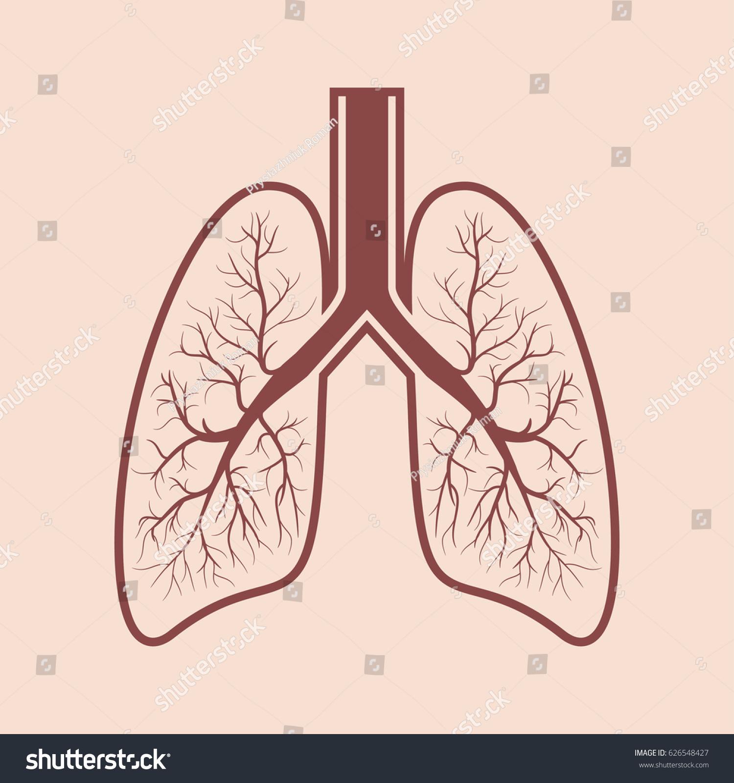 Human Lung Anatomy Respiratory System Graphics Stock Vector ...