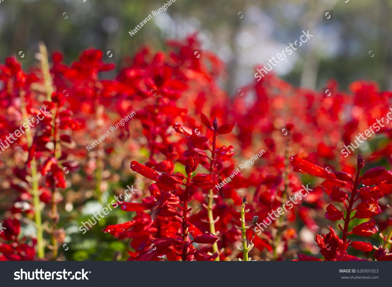 Beautiful tropical flowers ez canvas id 626901023 izmirmasajfo
