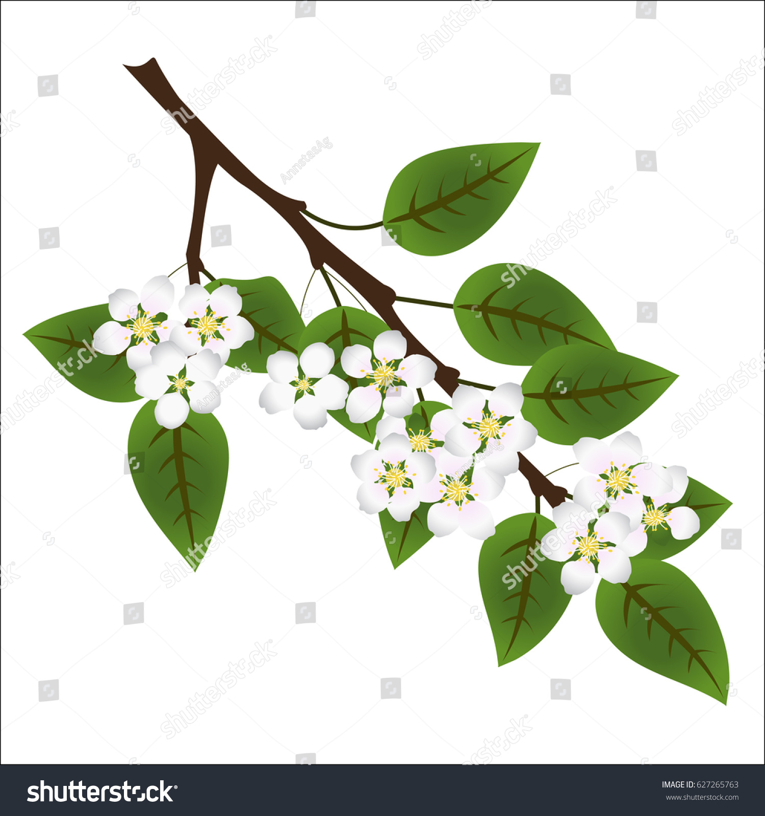 Branch Apple Tree Green Leaves White Stock Vector 627265763