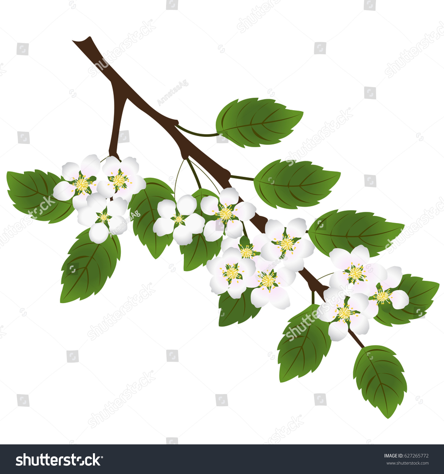 Branch Tree Green Leaves White Flowers Stock Vector Royalty Free