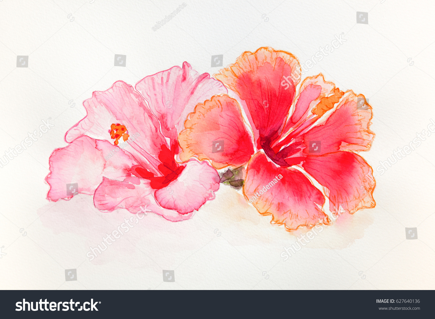 Watercolor hibiscus flowers stock illustration 627640136 shutterstock watercolor hibiscus flowers izmirmasajfo