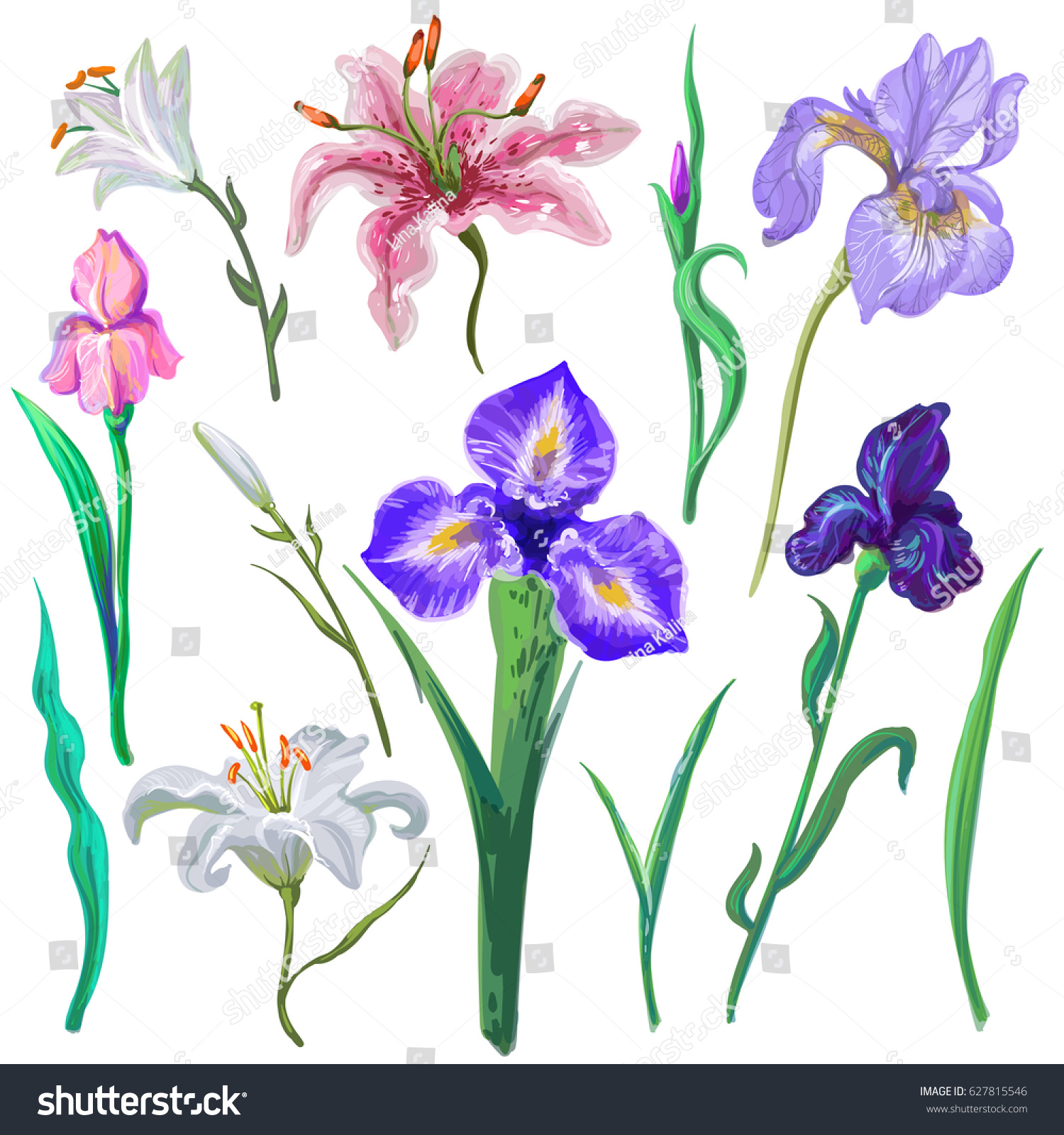 Collection different vector flowers bouquet creation stock vector collection of different vector flowers for bouquet creation iris lily leaves vector hand izmirmasajfo