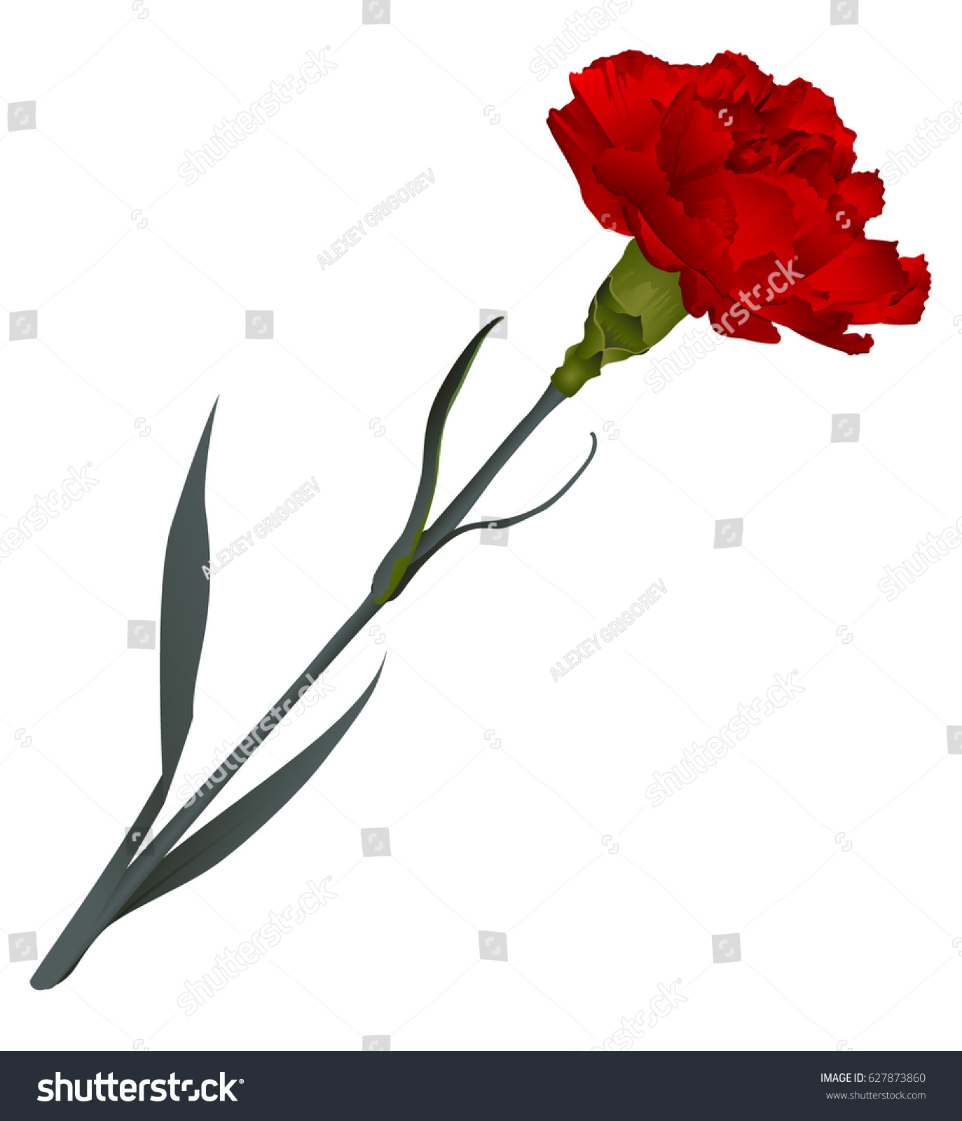Red Carnation Flower Isolated On White Stock Vector Royalty Free