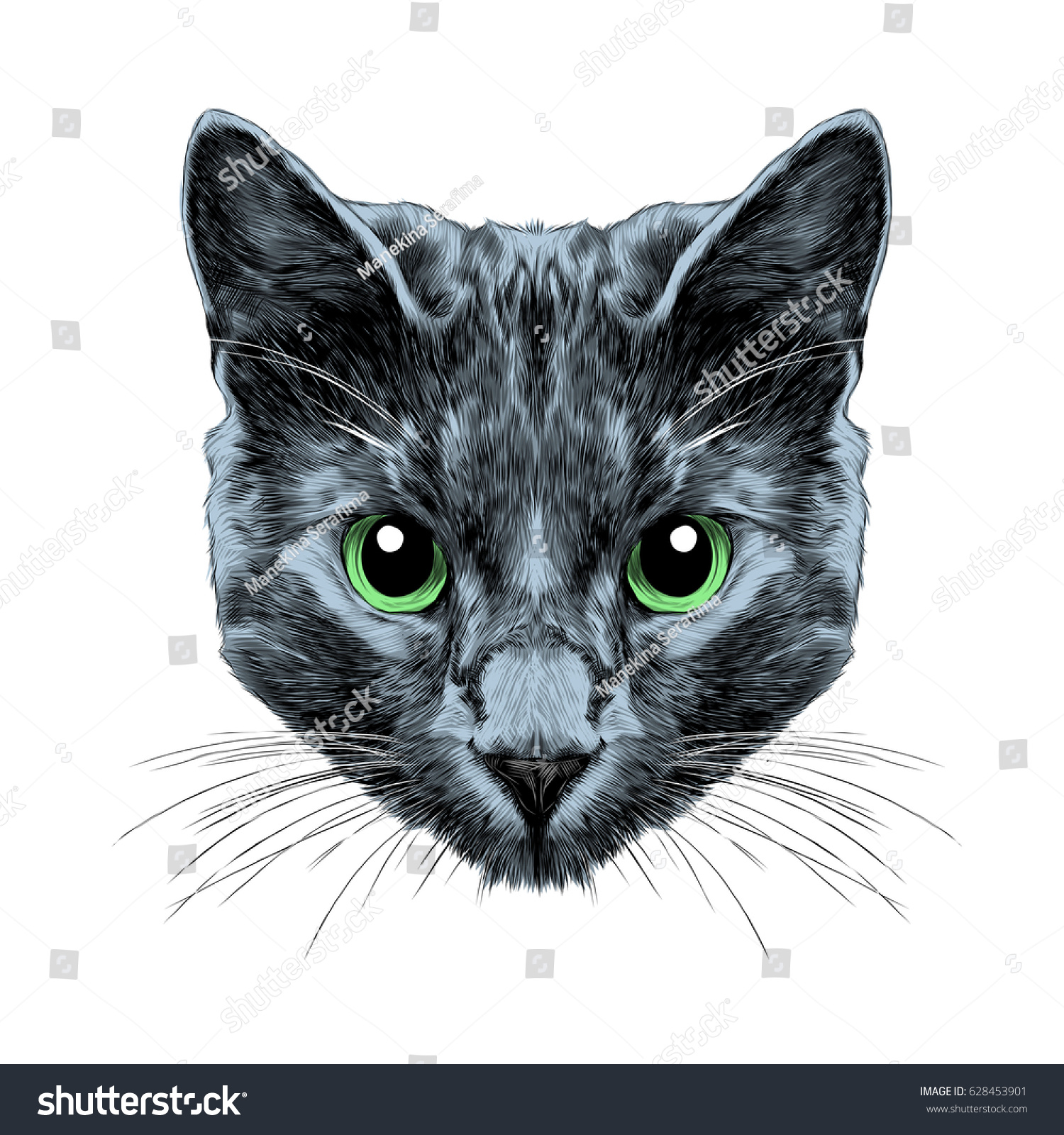 cat breed russian blue face sketch stock vector 628453901