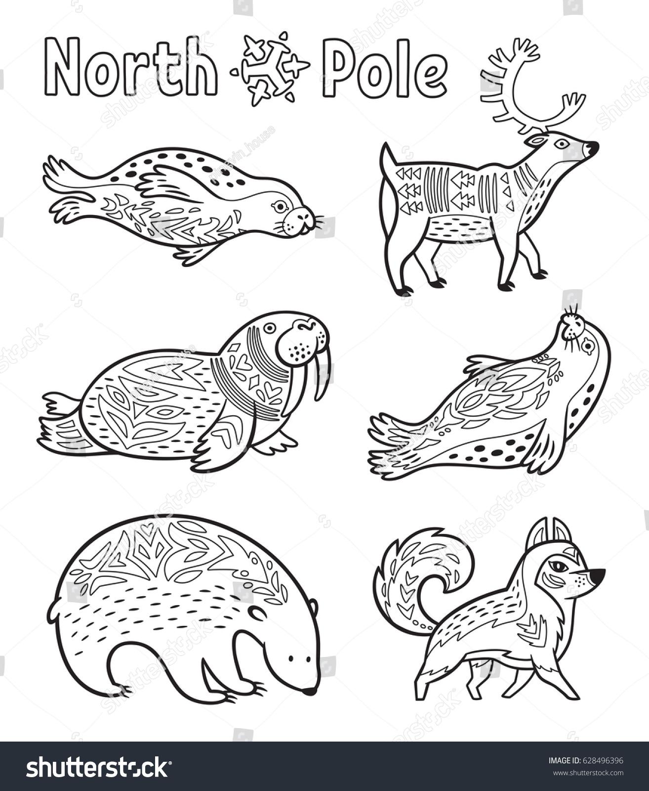 collection arctic animals seals walrus deer stock vector 628496396