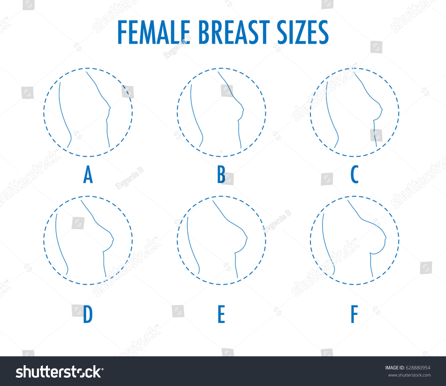 Breast size from a to b