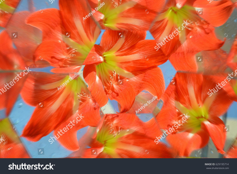 Abstract background beautiful flowers nature kaleidoscope ef ez id 629195714 izmirmasajfo