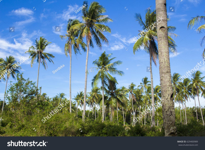 palm tree jungle on tropical island stock photo 629400989