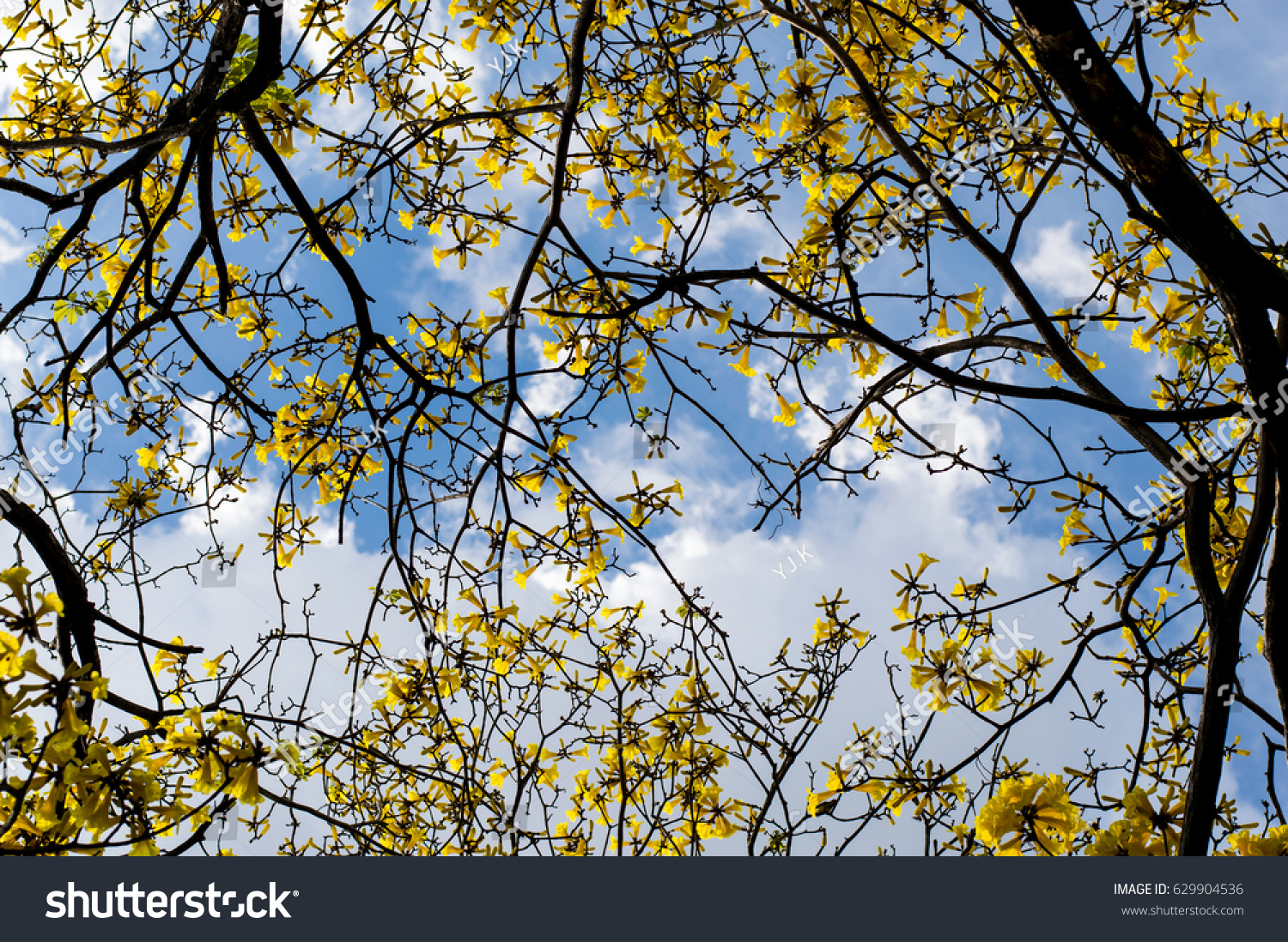 Yellow flower on tree with blue sky ez canvas id 629904536 izmirmasajfo