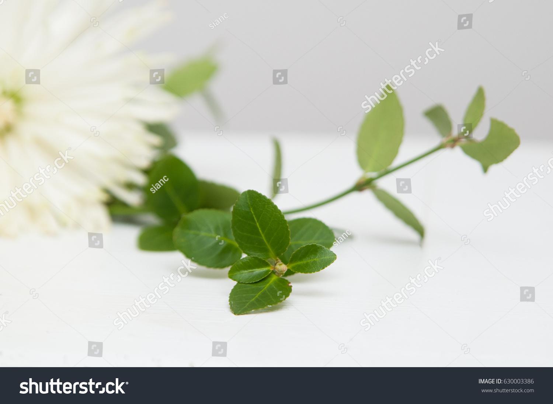 Minimalist Flower White Background Stock Photo Edit Now Shutterstock