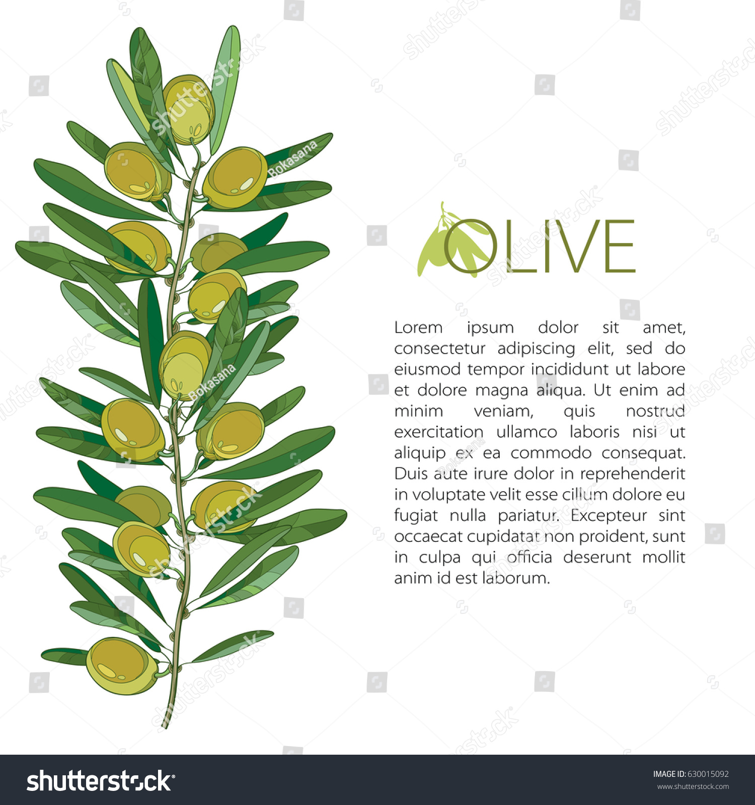 Vector Template Outline Green Olive Unripe Stock Vector 630015092 ...