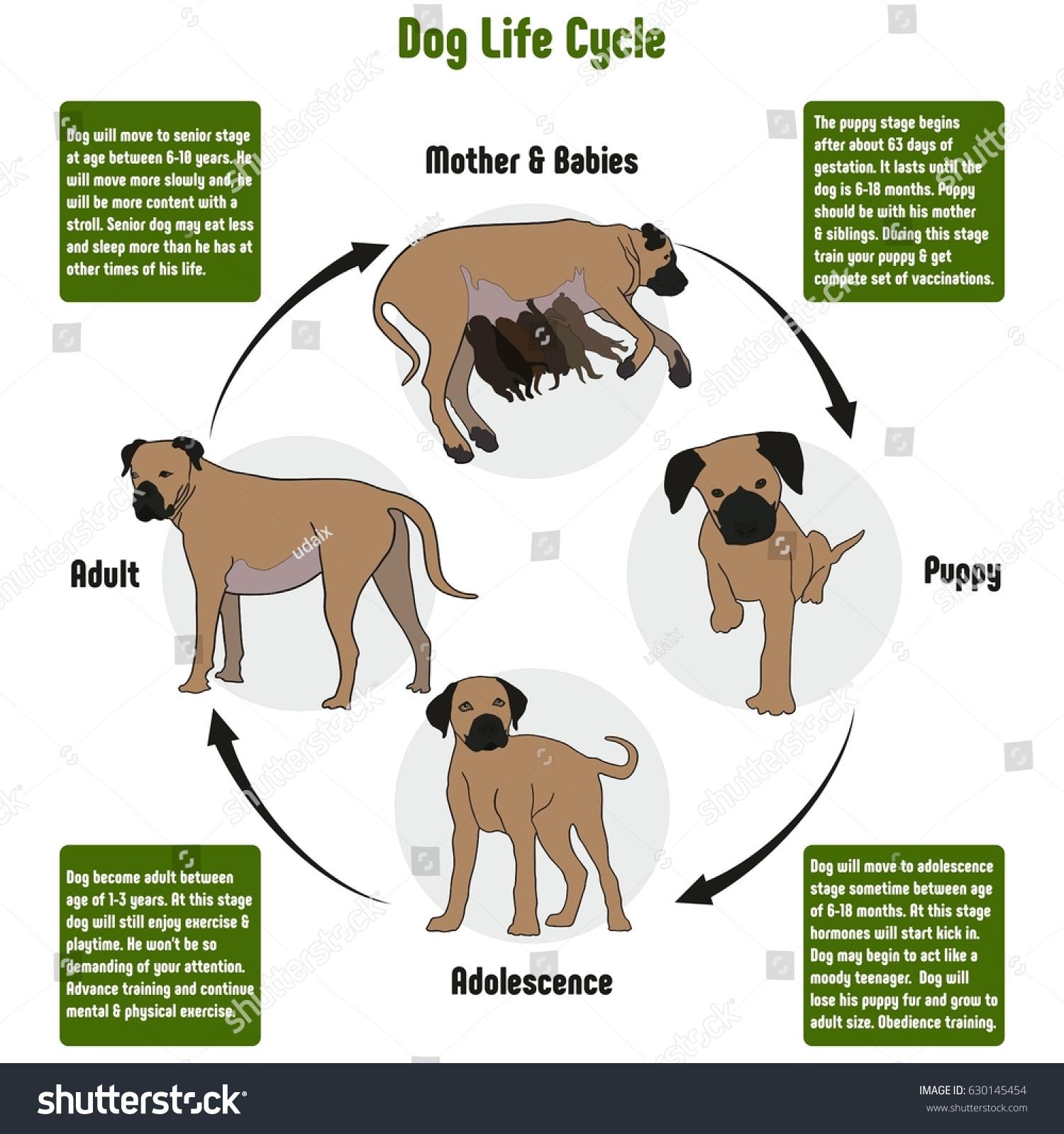 Dog anatomy for kids 7710054 - togelmaya.info