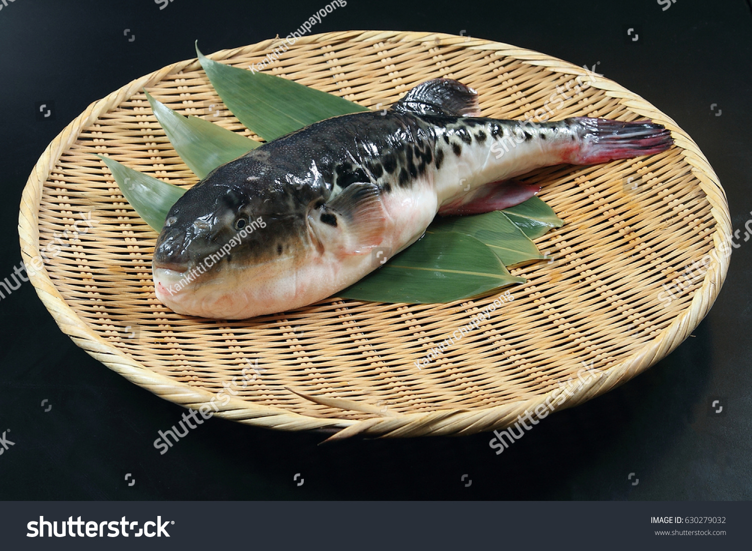 Japanese Fugu Fish Puffer Fish Stock Photo 630279032