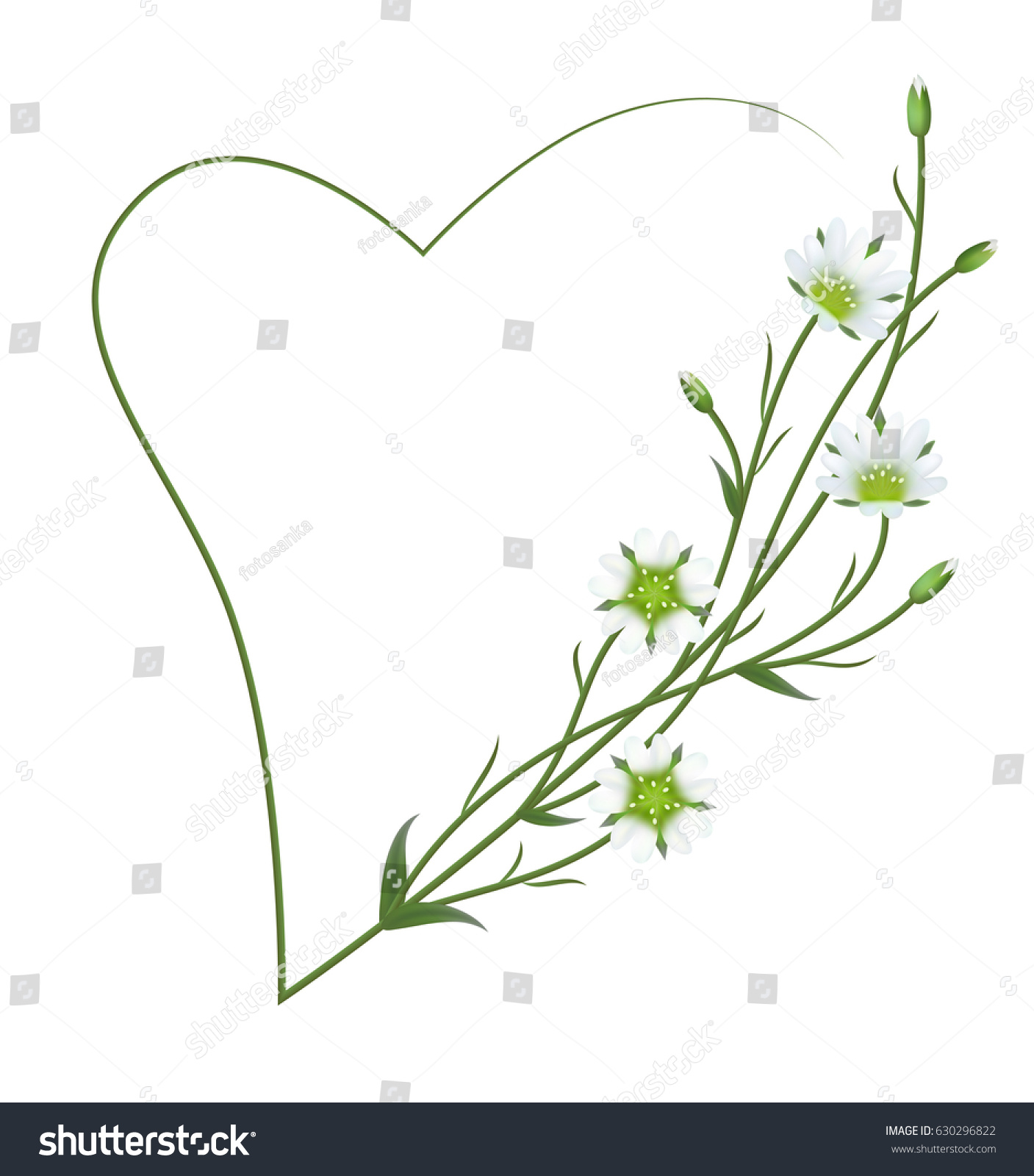 Realistic field chickweed cerastium arvense symbol stock vector realistic field chickweed cerastium arvense the symbol of peace and tranquility romantic biocorpaavc Image collections