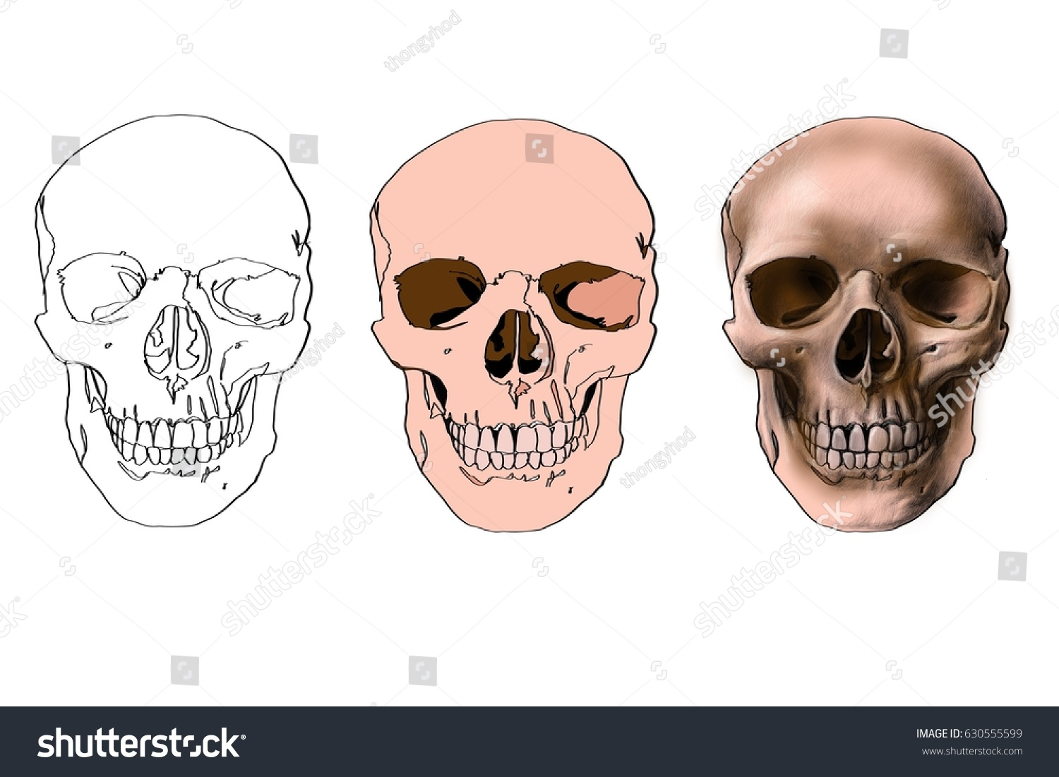 Line Drawing Of Human Face : Skull draw line drawing step stock illustration