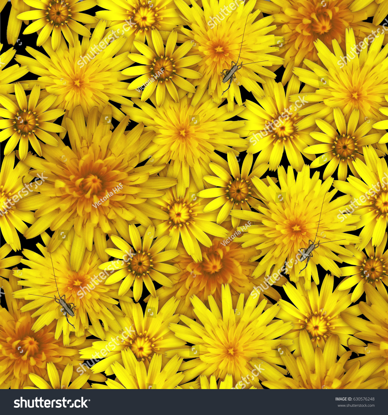 Seamless Pattern Yellow Aster Flowers Stock Photo Edit Now