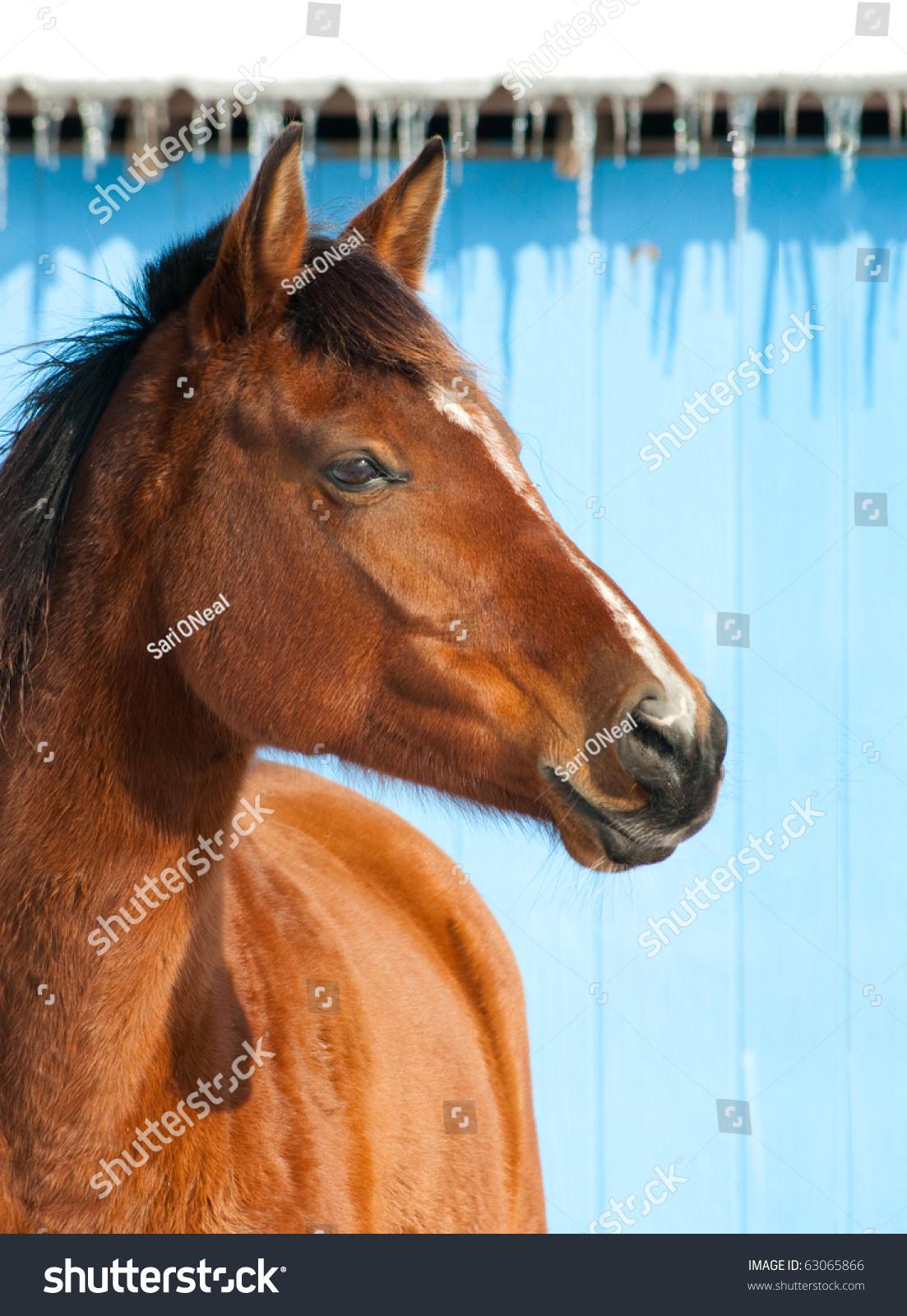 stock-photo-bay-horse-against-blue-barn-
