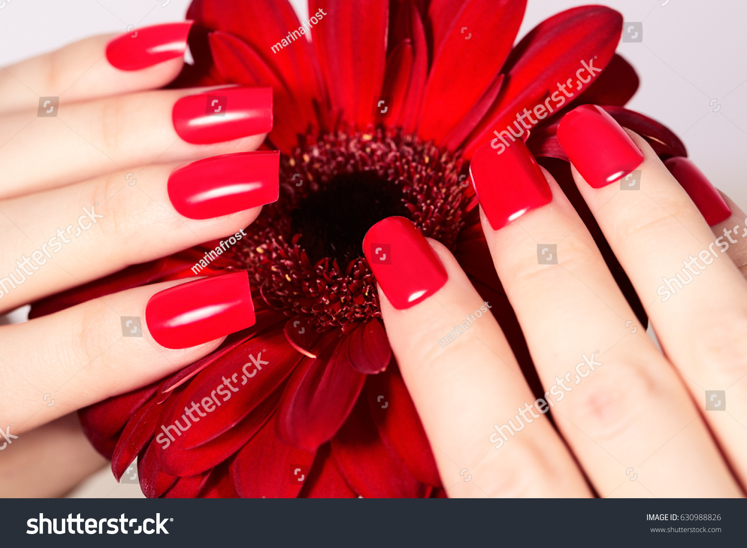 Beauty hands red fashion manicure bright stock photo 100 legal beauty hands with red fashion manicure and bright flower beautiful manicured red polish on nails izmirmasajfo