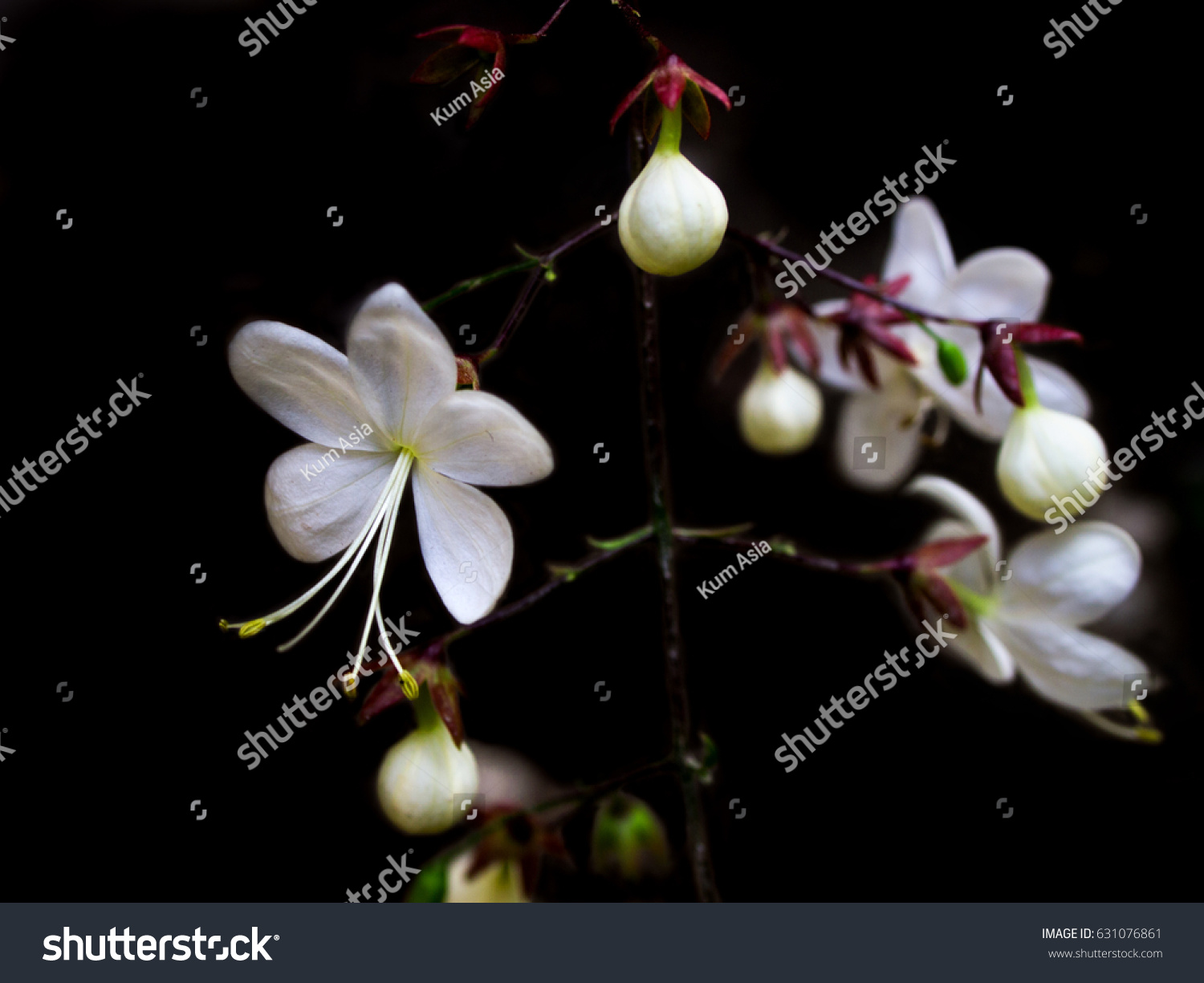 Images of white flowers with names images of white flowers with white flowers name nodding on black background mightylinksfo