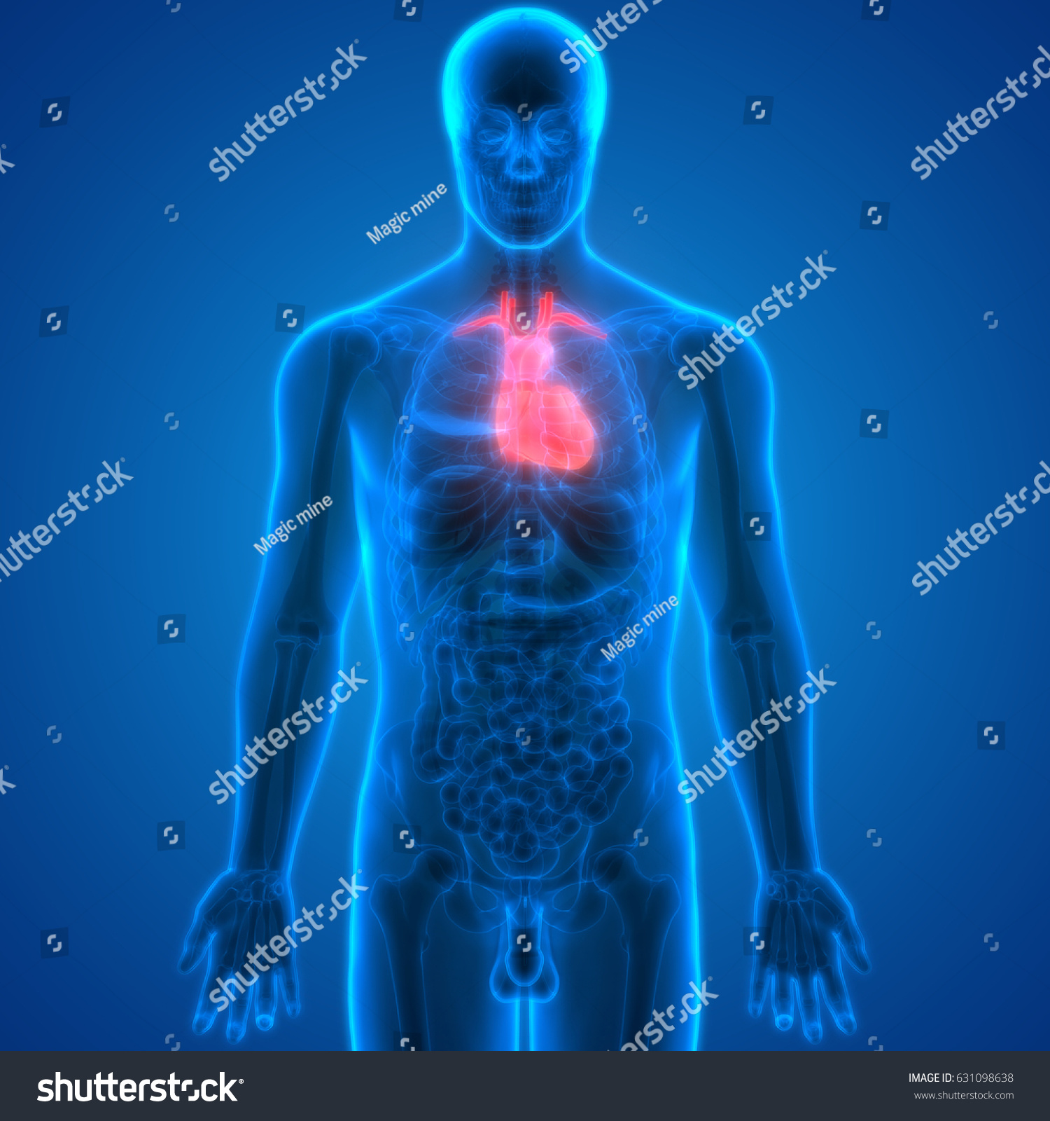 Human Body Organs (Heart Anatomy). 3D | EZ Canvas