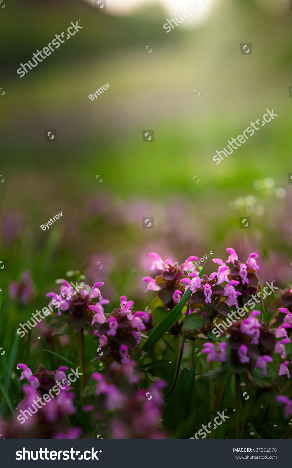 Purple Flowers Grass Stock Photo Edit Now 631352996 Shutterstock