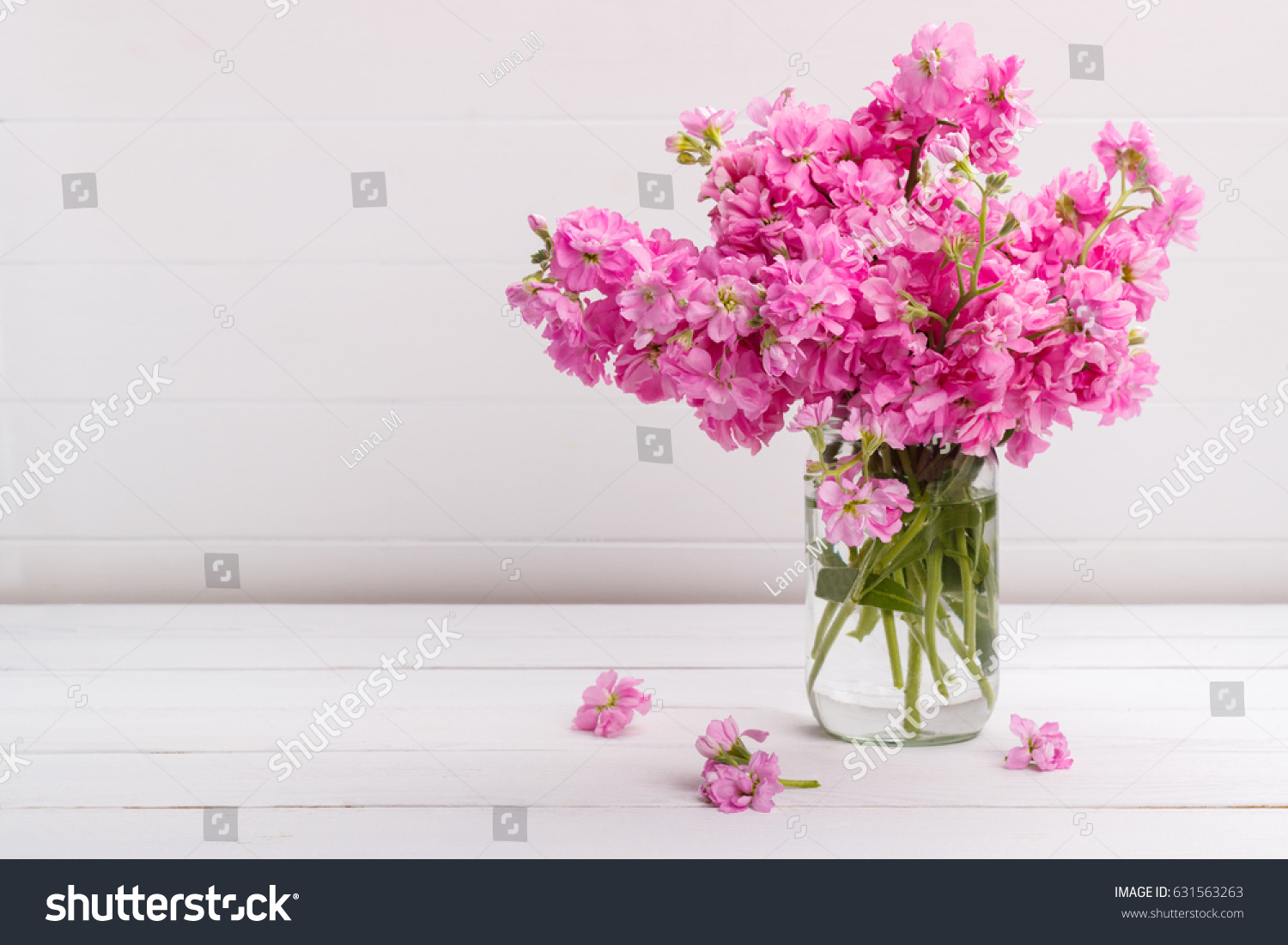 Bouquet Fragrant Pink Spring Flowers Matthiola Stock Photo Royalty