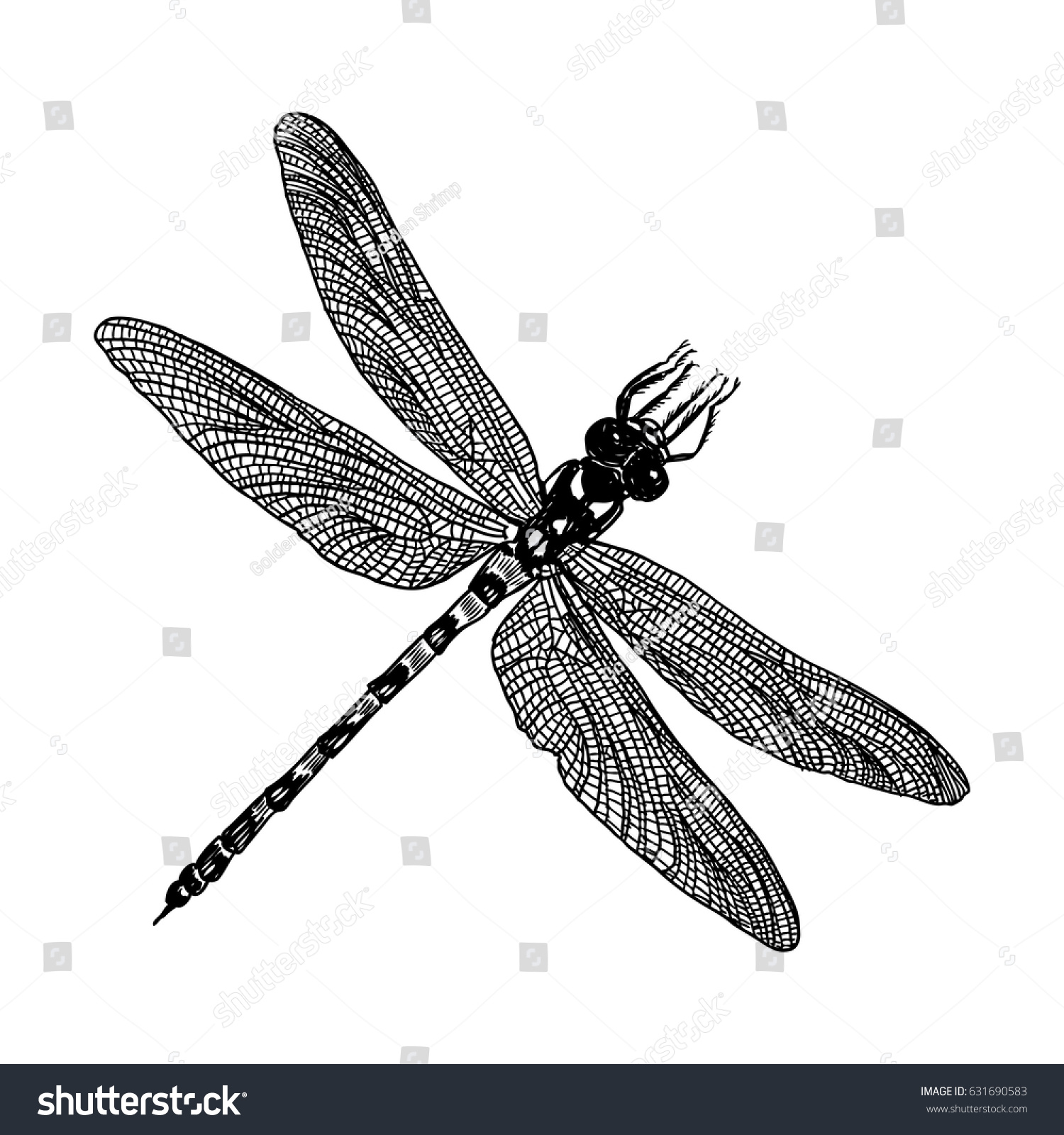 insect stipple drawing isolated dragonfly bug stock vector