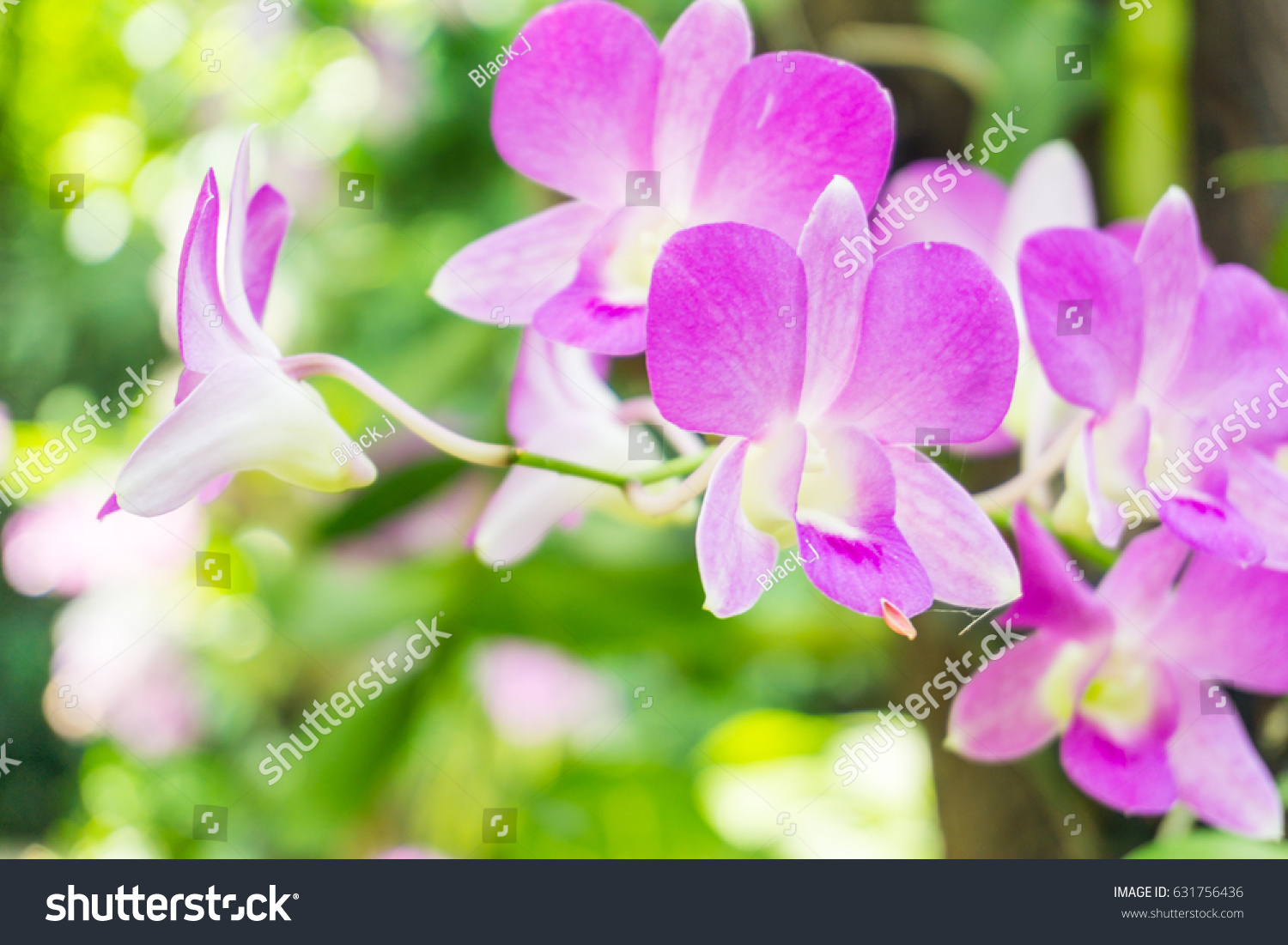 Beautiful Purple Orchid Flower Green Leaves Stock Photo Edit Now
