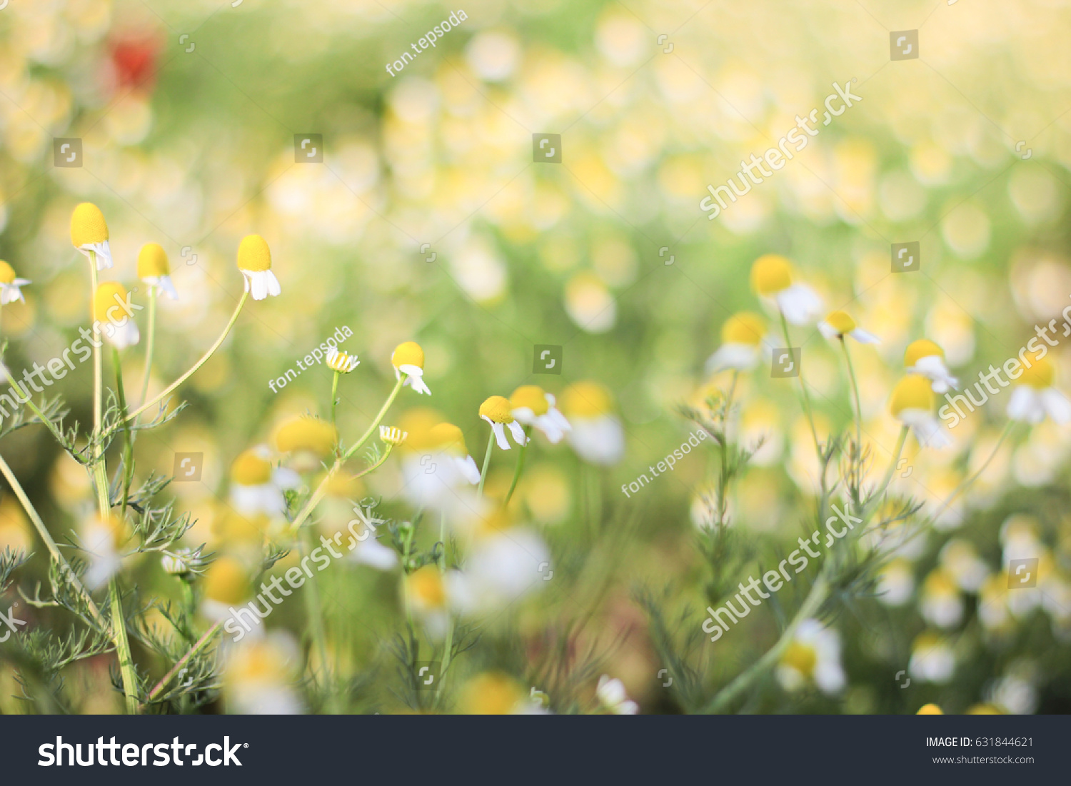 Blur Soft Yellow Flowers Background Stock Photo Edit Now 631844621