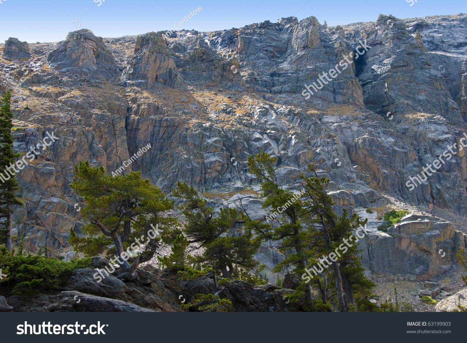 Gray cliff face colorado rocky mountains stock photo 63199903 gray cliff face in the colorado rocky mountains with lichens and a foreground of pine trees sciox Image collections