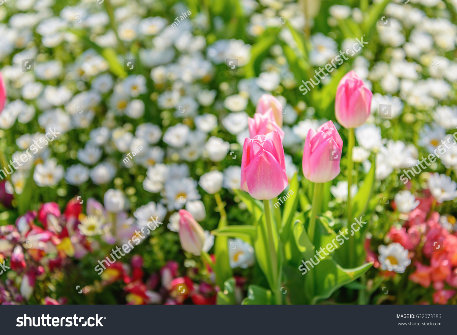 Beautiful flowers blooming flower bed stock photo edit now beautiful flowers blooming in the flower bed izmirmasajfo