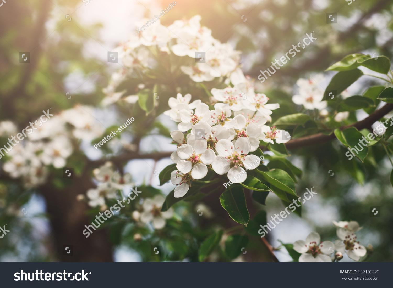 Blooming apple tree in spring ez canvas mightylinksfo