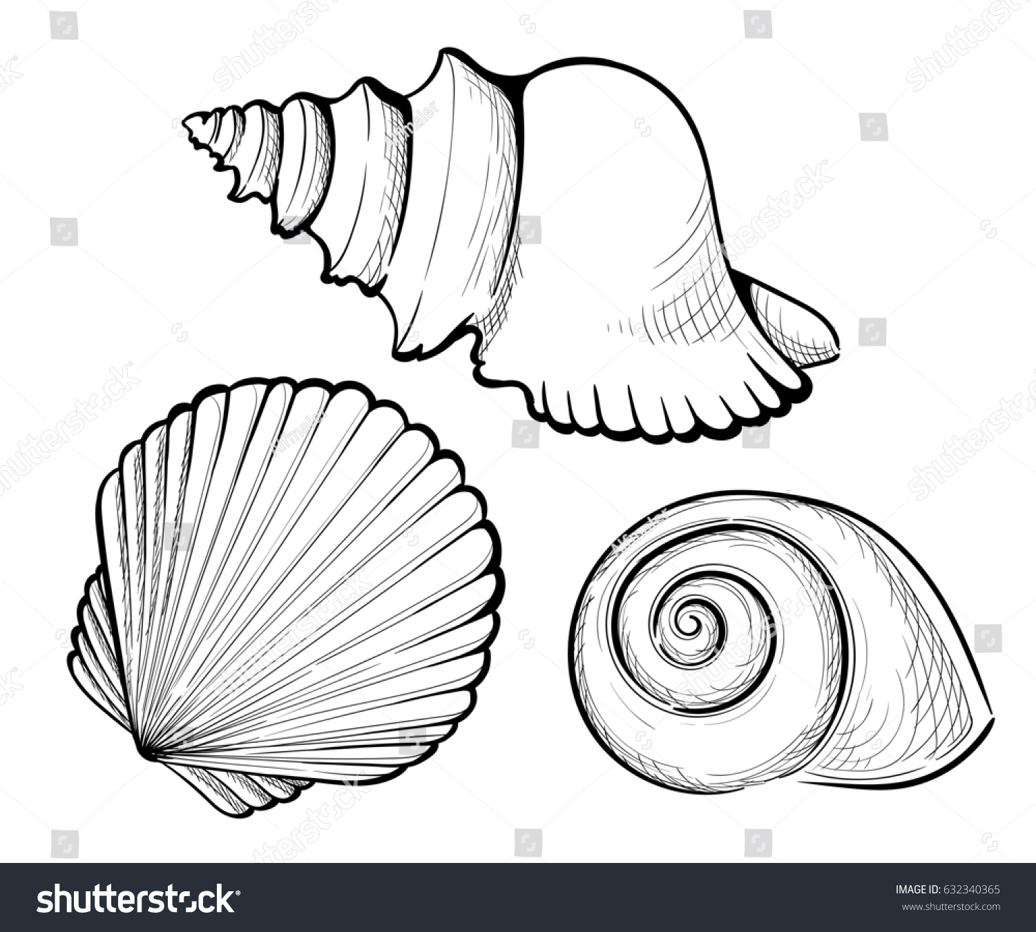 hand draw set sea shell coral stock vector 632340365 shutterstock