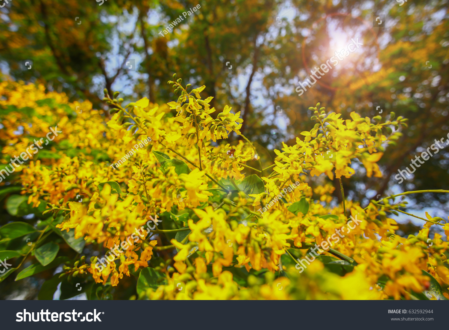 Yellow Flowers Small Bee Suckers Pollen Stock Photo Royalty Free