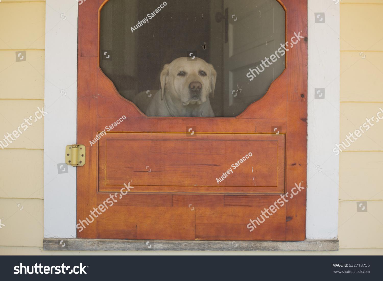 Dog Looks Through Screen Door Waiting Stock Photo Royalty Free