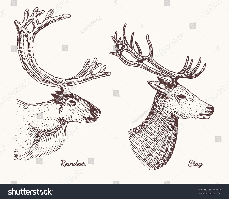 Reindeer Stag Deer Vector Hand Drawn Stock Vector (Royalty Free ...