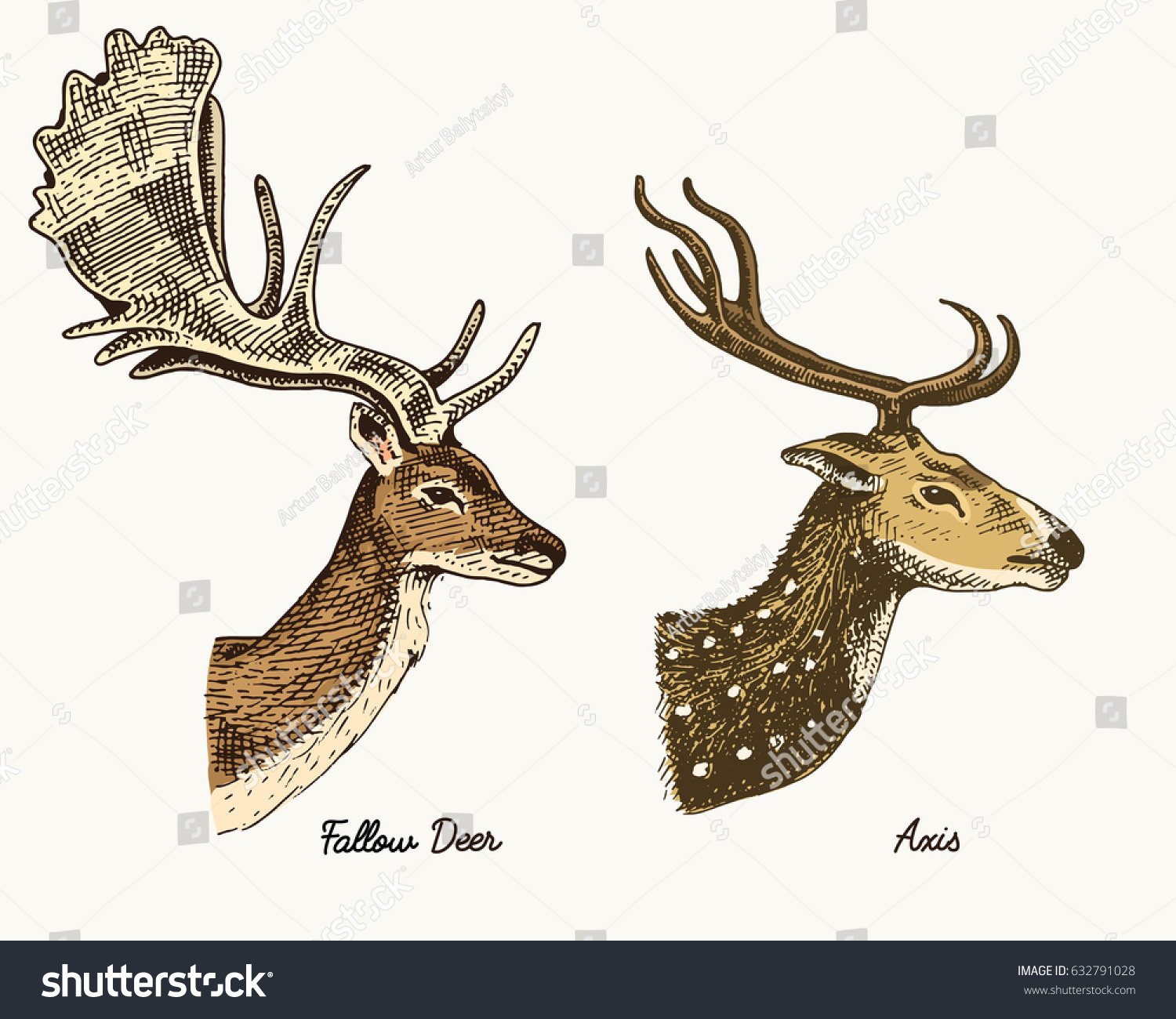 Roe Deer Doe Axis Indian Dotted Stock Vector (Royalty Free ...
