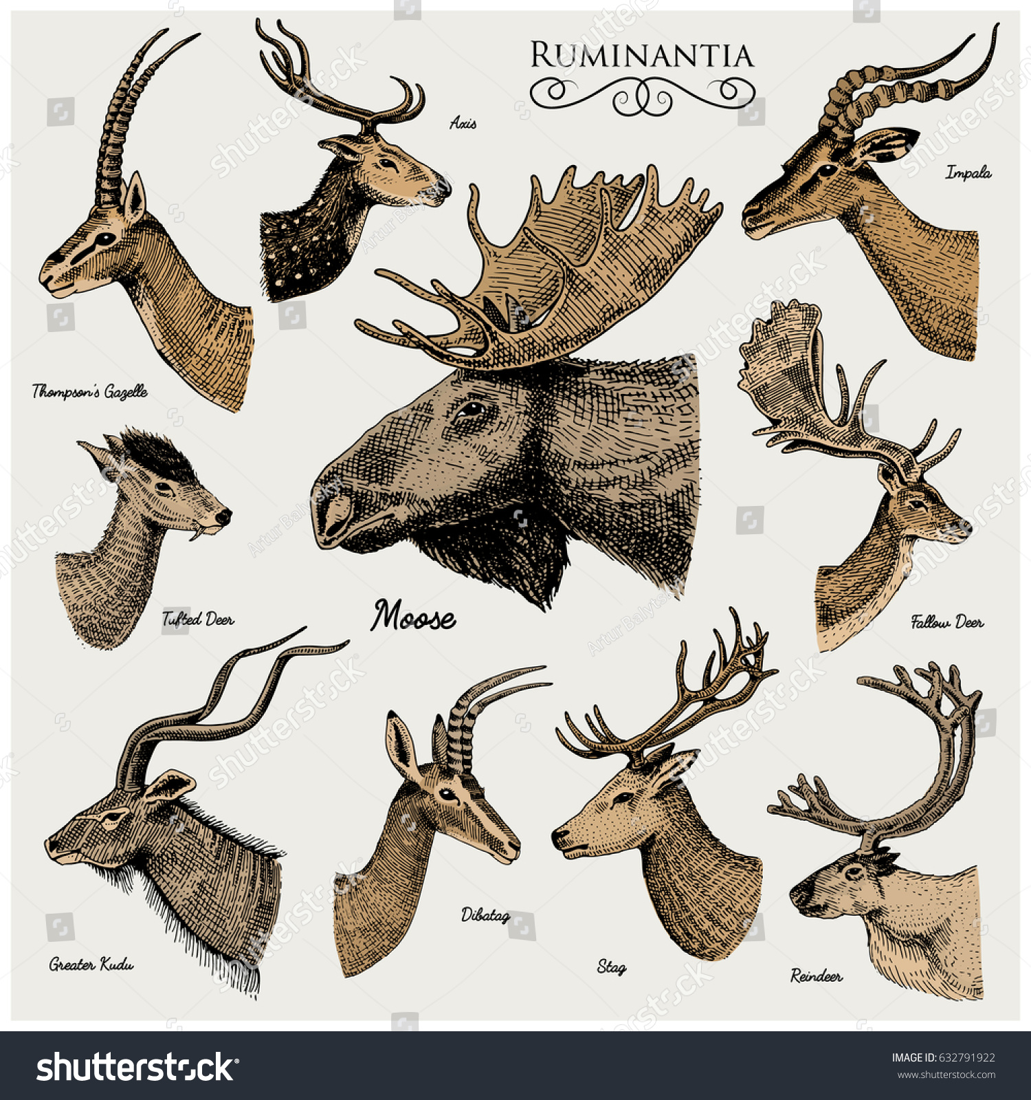 Big Set Horn Antlers Animals Moose Stock Vector (Royalty Free ...
