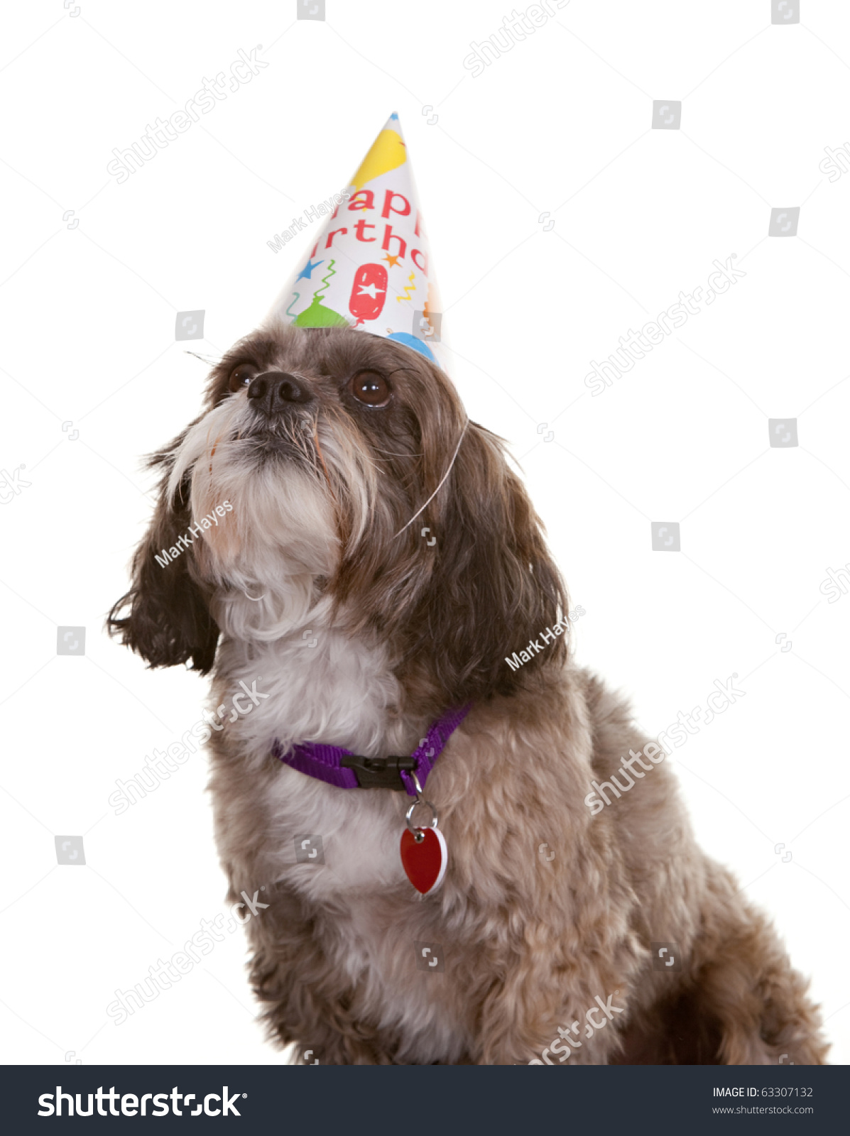 Small Dog Wearing A Birthday Party Hat