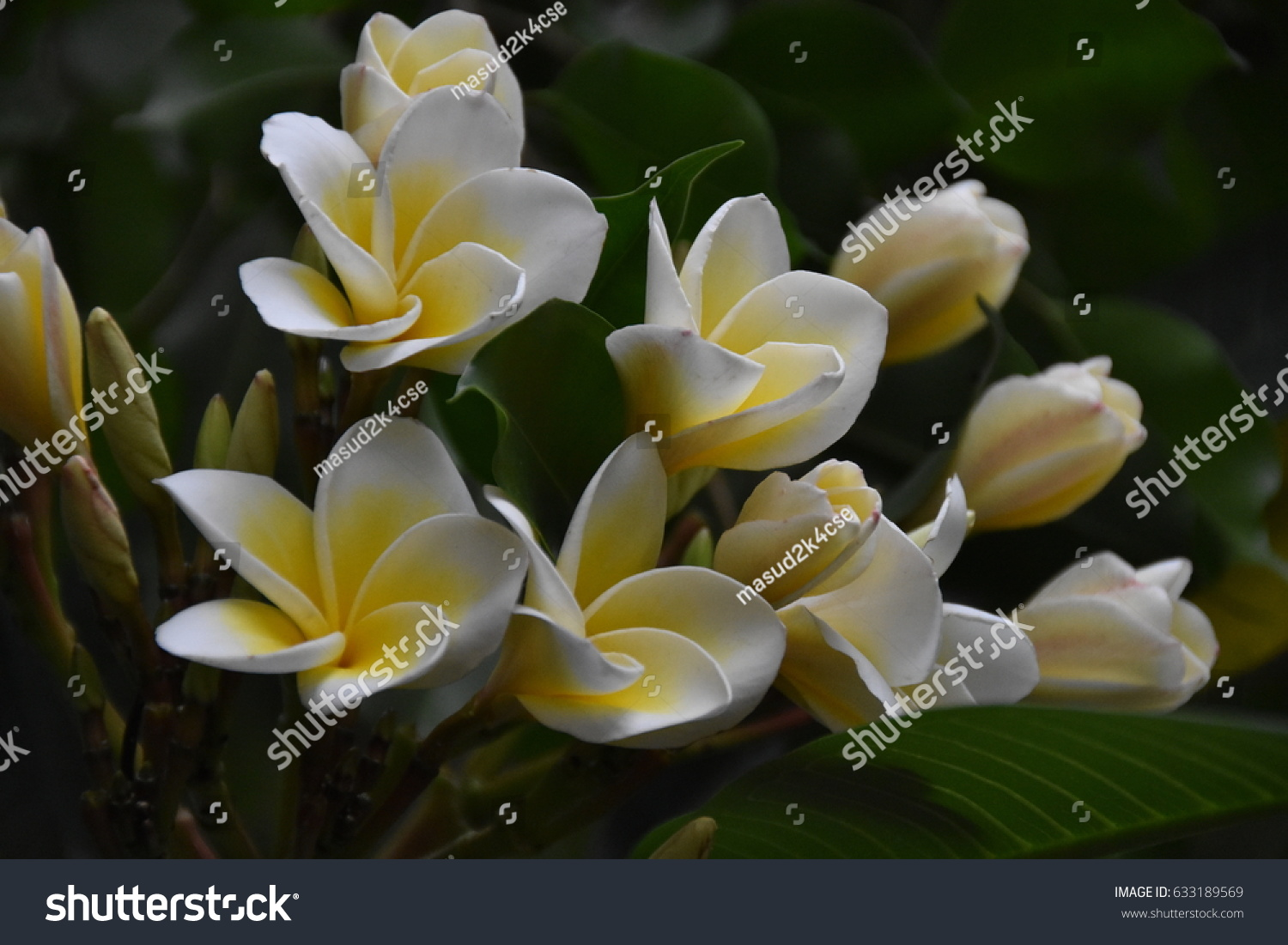 Natural beauty flowers stock photo edit now 633189569 shutterstock natural beauty flowers izmirmasajfo