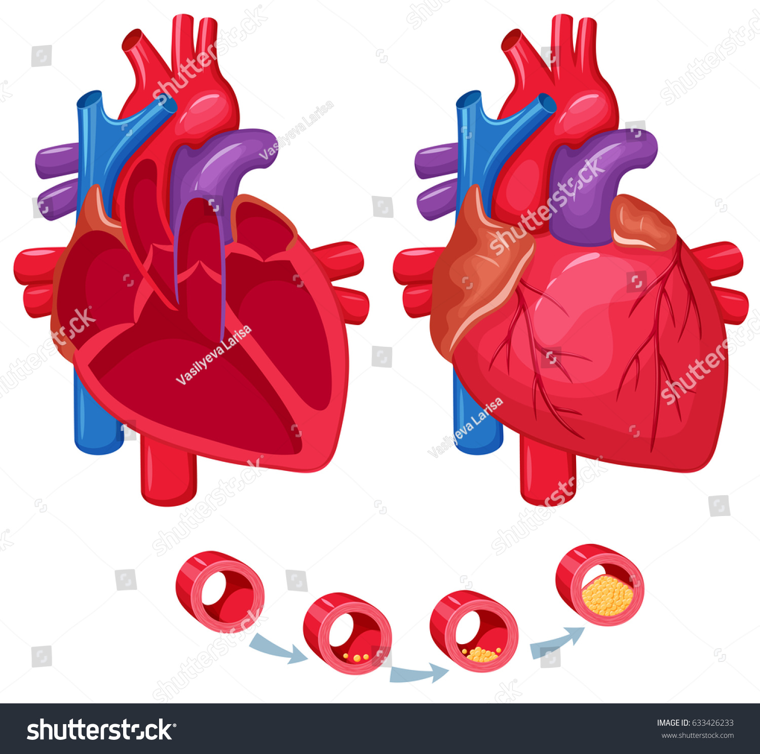 Human Heart Anatomy Medical Science Vector Stock Illustration ...