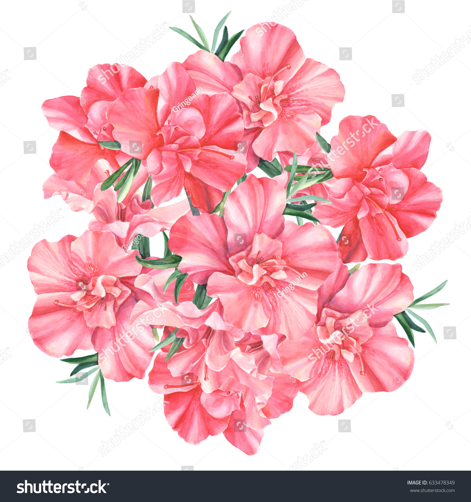 Rhododendron Beautiful Flowers Bouquet Hand Drawing Stock ...