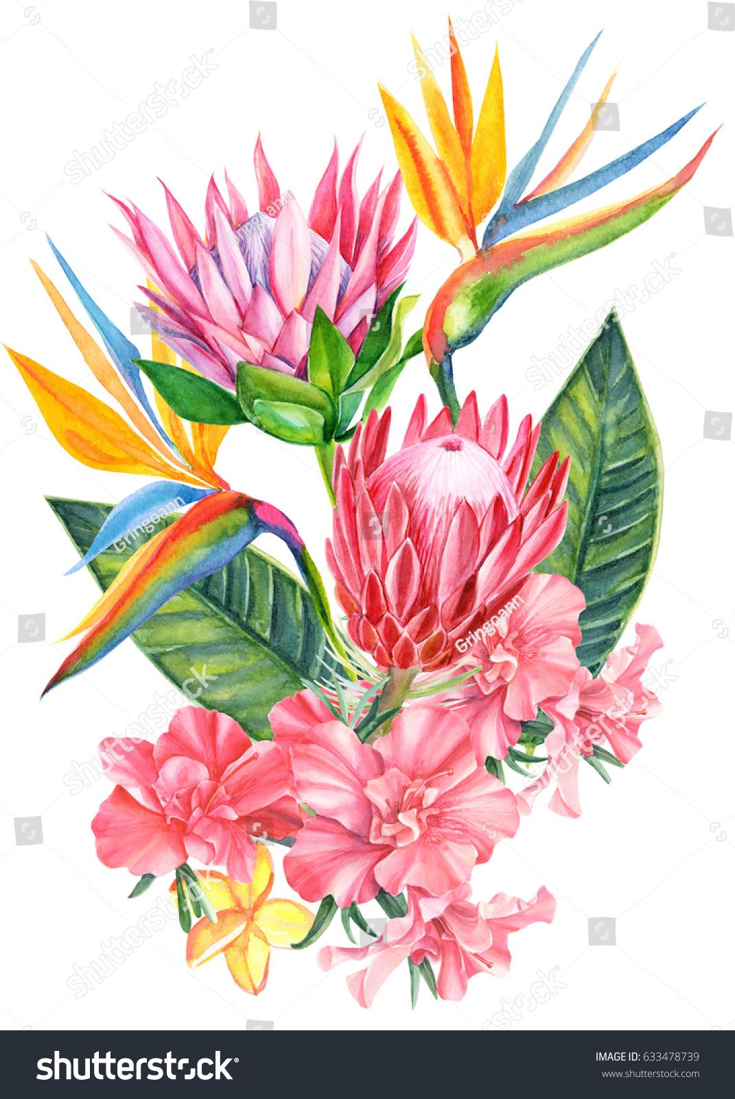 Rhododendron Strelitzia Protea Beautiful Flowers Bouquet Stock ...