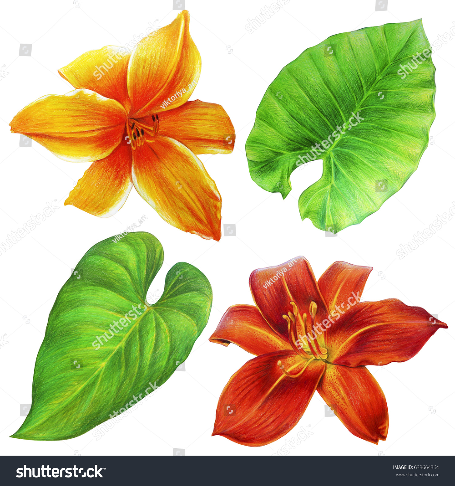 Beautiful exotic flowers leaves drawing daylily stock illustration beautiful exotic flowers and leaves drawing daylily and greenery izmirmasajfo