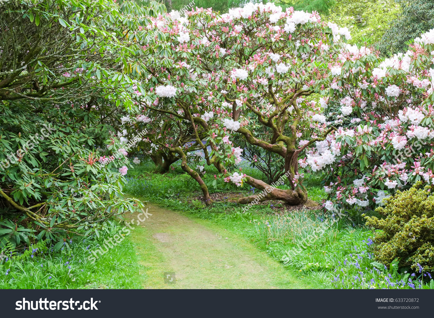 Wild Flowers Flowering Bushes Trees Springtime Stock Photo Edit Now