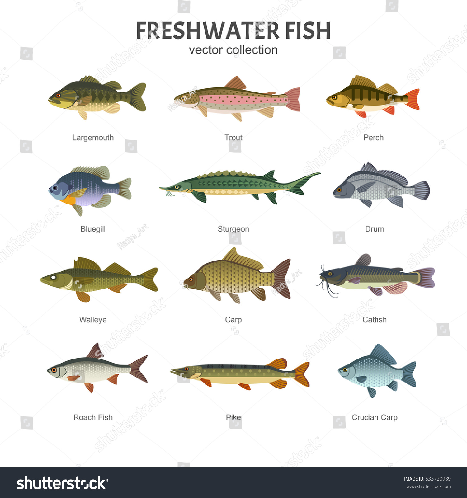 Freshwater fish set vector illustration different stock for Fish representative species