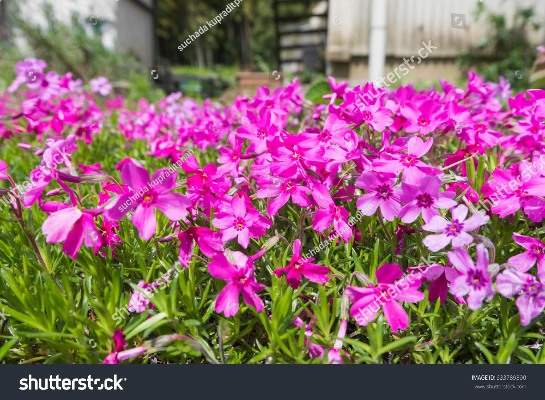 Pink Flower Park Backgroundselective Focus Stock Photo 633789890 ... for Flower Park Background  153tgx