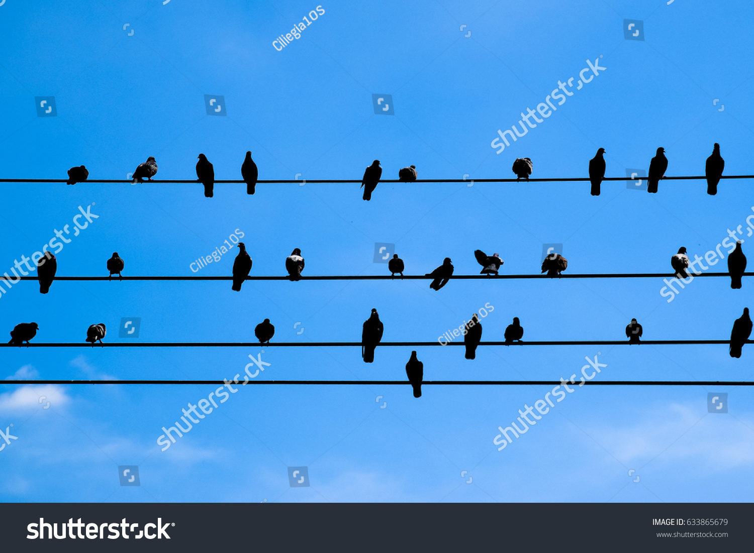 Birds Sitting On Telephone Wire Silhouettes Stock Photo (Download ...